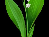 Цветы в стихах и  прозе
