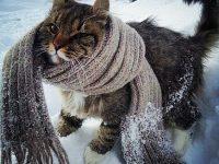 Экологический календарь День кошек в России