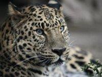 «Земле леопарда» – 5 лет!