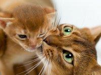 Кошки с книжной обложки