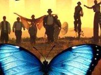 «Цирк бабочек» в бесплатной столовой